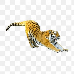 Flying Tiger - Ningbo Youngor Zoo Felidae Siberian Tiger Cat Chinese Zodiac PNG