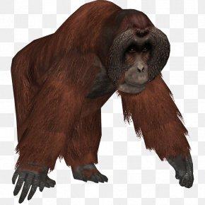 Orangutan - Zoo Tycoon 2 Common Chimpanzee Western Gorilla Bornean Orangutan PNG