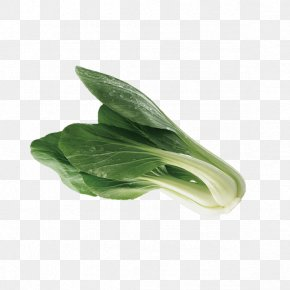 Green Cabbage - Leaf Vegetable Bok Choy Cabbage PNG