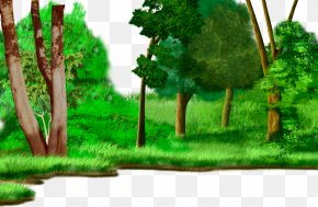 Cartoon Painted Grassland Forest Plants - Forest Drawing Cartoon Animation Watercolor Painting PNG