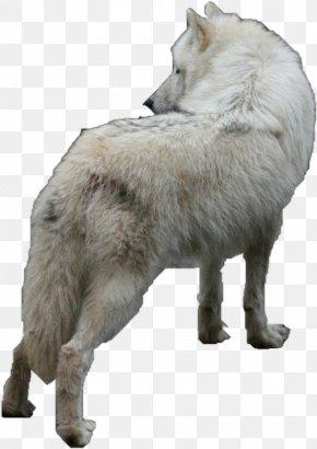 Czechoslovakian Wolfdog Alaskan Tundra Wolf Arctic Wolf PNG