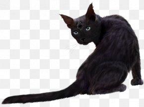 The Cat Among The Flowers - Siberian Cat Norwegian Forest Cat Persian Cat Nebelung Havana Brown PNG