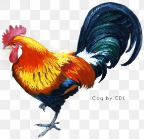 Cock - Coq Coenzyme Q10 Wiki Computer File PNG