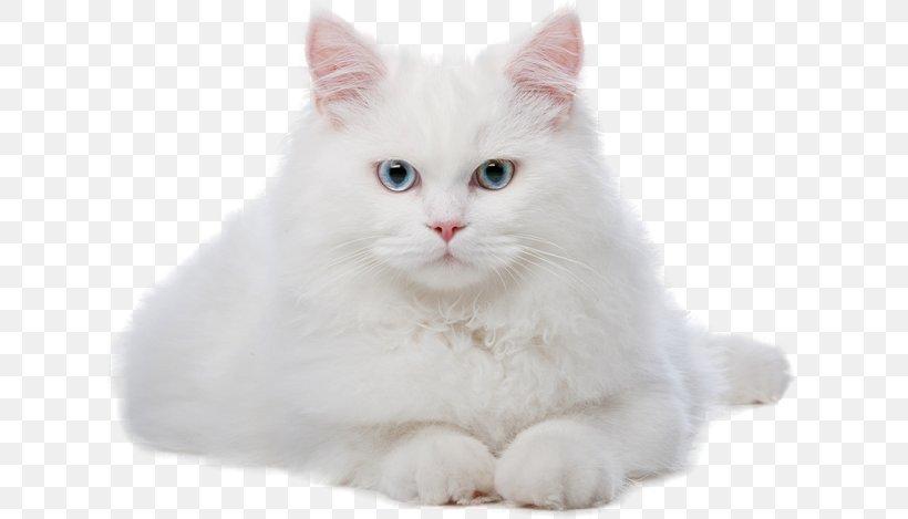 Cat Kitten Veterinarian, PNG, 650x469px, Cat, Asian Semi Longhair, British Semi Longhair, Carnivoran, Cat Like Mammal Download Free