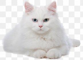 Cat - Cat Kitten Veterinarian PNG