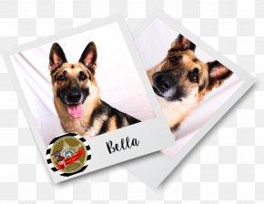German Shepherd Dog - Brevard County Sheriff's Office Dog Breed German Shepherd Puppy Letter PNG