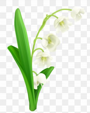 Lily Of The Valley Clipart - Lily Of The Valley Lilium Flower Clip Art PNG