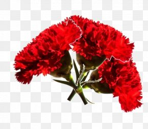 Terço - Carnation Revolution Era Uma Vez Cut Flowers 25 April PNG