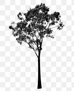 Eucalyptus - Gum Trees Silhouette Clip Art PNG