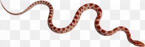 Snake Image Picture Download - Boa Constrictor Kingsnakes Boas Constriction PNG