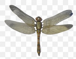 Dragonfly - Dragonfly Icon Computer File PNG