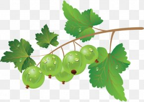 Blueberry - Fruit Blueberry Vegetable Vector Graphics Image PNG
