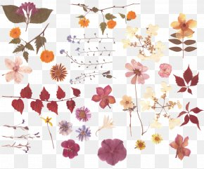Dried Leaves Flowers - Pressed Flower Craft Nosegay Flower Bouquet PNG