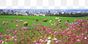 National Taiwan University, Sapporo Sheep Mound Outlook Figure - Hitsujigaoka Observation Hill Sheep National Taiwan University PNG