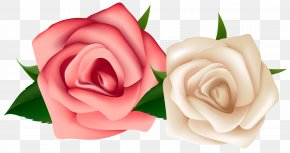 Red And White Roses Clipart Image - Rose White Clip Art PNG