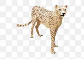 Vector Cheetah - Cheetah Leopard Felinae PNG