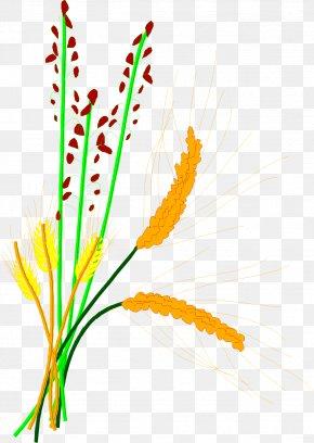 Barley Rice Paddy Rice Grain - Rice Cereal Grain Clip Art PNG