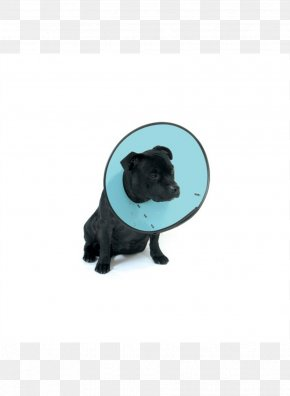Cat - Cat Elizabethan Collar Pug Dog Breed PNG