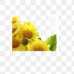 Sunflower - China Double Ninth Festival Tung Shing 9u67089u65e5 Traditional Chinese Holidays PNG