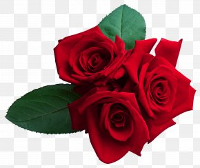 Red Roses Clipart Image - Rose Wallpaper PNG