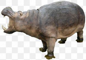 Hippo - Hippopotamus Clip Art PNG