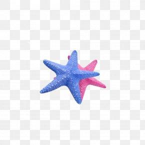 Sea Stars - Starfish Callopatiria Granifera Icon PNG