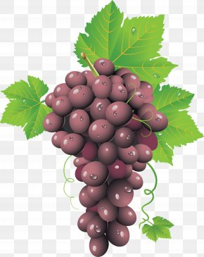 Red Grape Image - Common Grape Vine Wine Grape Leaves PNG