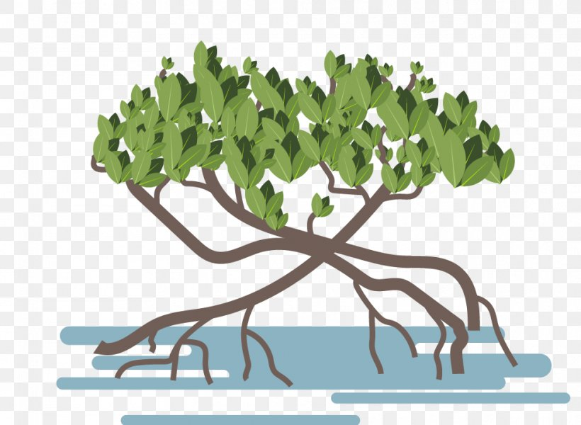 Mangrove Vector Graphics Image Illustration Tropical Forest, PNG, 988x724px, Mangrove, Black Mangrove, Branch, Cypress Knee, Drawing Download Free