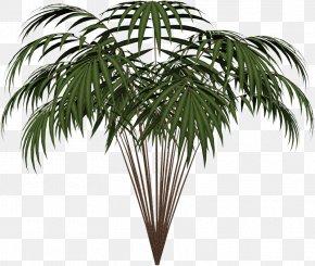 Leaf - Palm Trees Leaf Clip Art Areca Palm Plants PNG