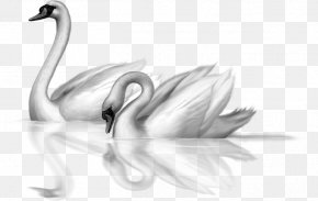 Winter Swan Cliparts - Black Swan Bird Drawing Clip Art PNG