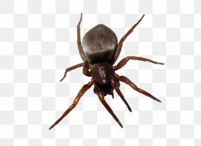 Bug Image - Software Bug Wiki Computer File PNG