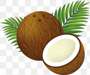 Coconut Image - Coconut Water Coconut Milk Clip Art PNG