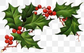 Corner Holly Cliparts - Common Holly Christmas Tree Clip Art PNG