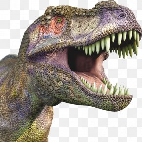 Dinosaur - Tyrannosaurus Velociraptor Dinosaur PNG