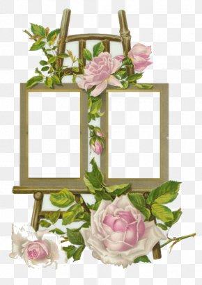 Design - Picture Frames Floral Design Photography PNG