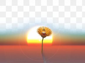 Beautiful Desert Image - Transvaal Daisy Energy Sunlight Sky Wallpaper PNG