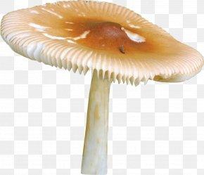 Mushroom - Mushroom Griby Raster Graphics Clip Art PNG