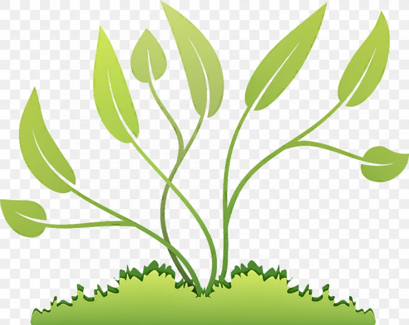 Leaf Plant Green Flower Tree, PNG, 903x720px, Leaf, Flower, Grass, Grass Family, Green Download Free