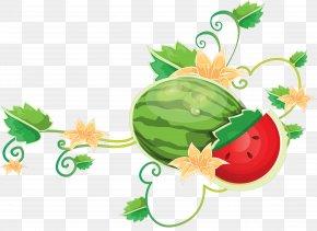 Watermelon - Common Grape Vine Watermelon PNG