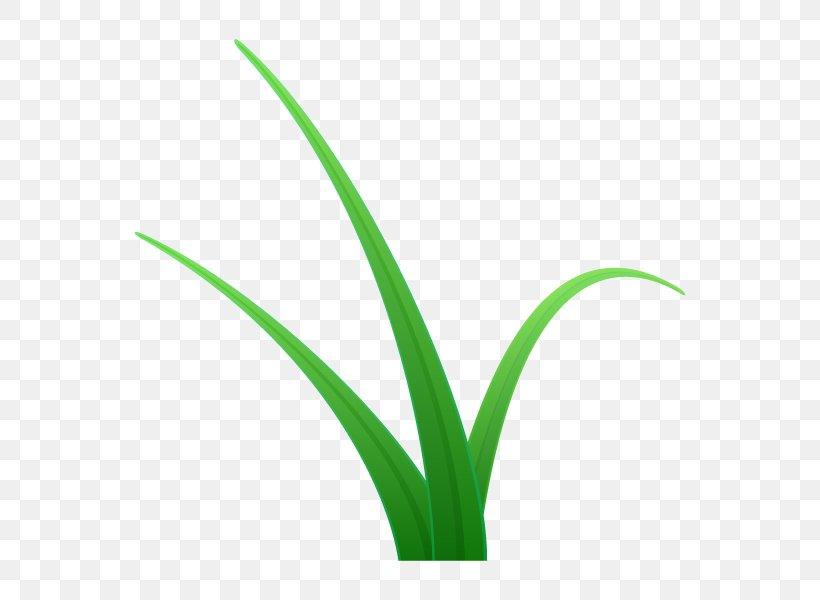 Grasses Plant Stem Flower Leaf Line, PNG, 600x600px, Grasses, Flower, Flowering Plant, Grass, Grass Family Download Free