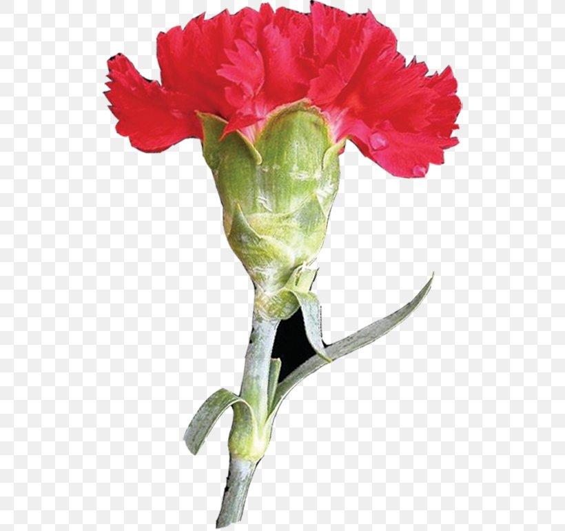Garden Roses Carnation Mother's Day Flower Clip Art, PNG, 524x770px, Garden Roses, Bud, Carnation, Cut Flowers, Designer Download Free