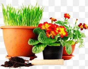 Flower Pot - Lawn Green Mat Yellow Seedling PNG