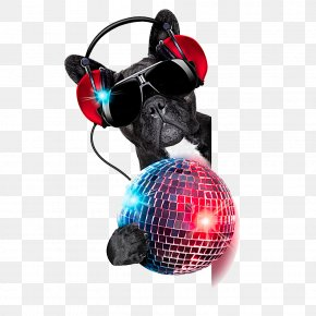 Colored Disco Ball - Dog Stock Photography Nightclub Disc Jockey Disco PNG