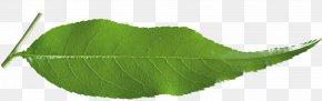 Leaf - Leaf Plant Stem Tree PNG