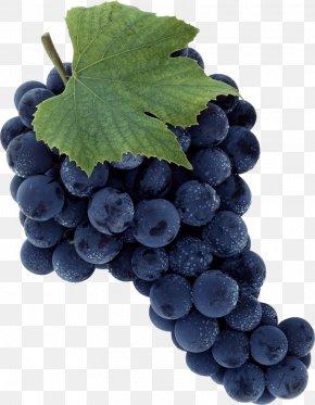 Grape Image Download Picture - Common Grape Vine PNG
