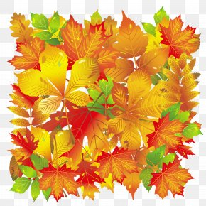 Transparent Fall Leaves - Autumn Leaf Color PNG