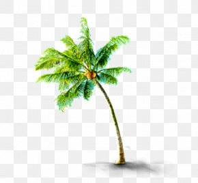 Tropical Coconut Trees - CorelDRAW PNG