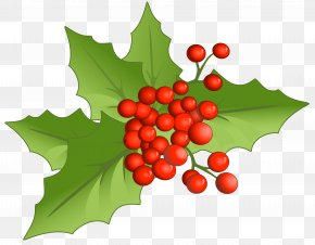 Christmas Large Mistletoe Clipart - Holly Aquifoliales Natural Foods Fruit Christmas PNG