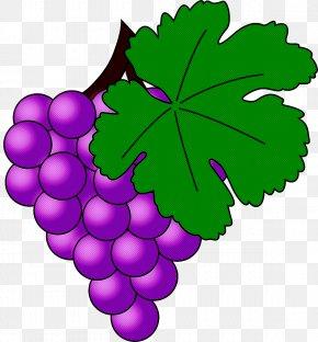 Flower Vitis - Grape Grape Leaves Leaf Grapevine Family Seedless Fruit PNG
