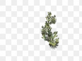 Leaf - Twig Mimosa Desktop Wallpaper Plant Stem Photography PNG
